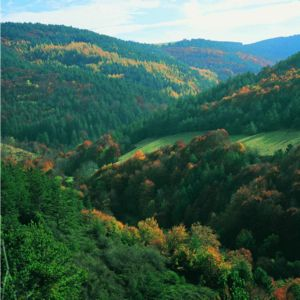 El bosque